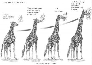 Natural Selection In Giraffes - 5.04 Collaboration Option